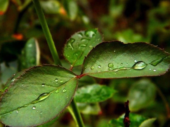 lovely_rain_drops_by_tarzenlove-d550ohv