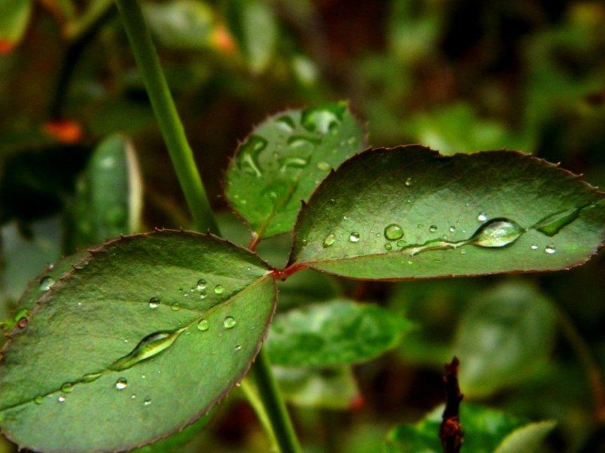 Monsoon Feeling