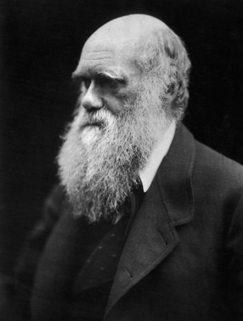 Charles_Darwin_photograph_by_Julia_Margaret_Cameron,_1968