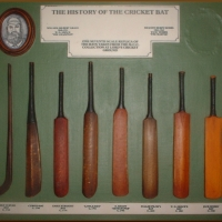 Botany Of Cricket