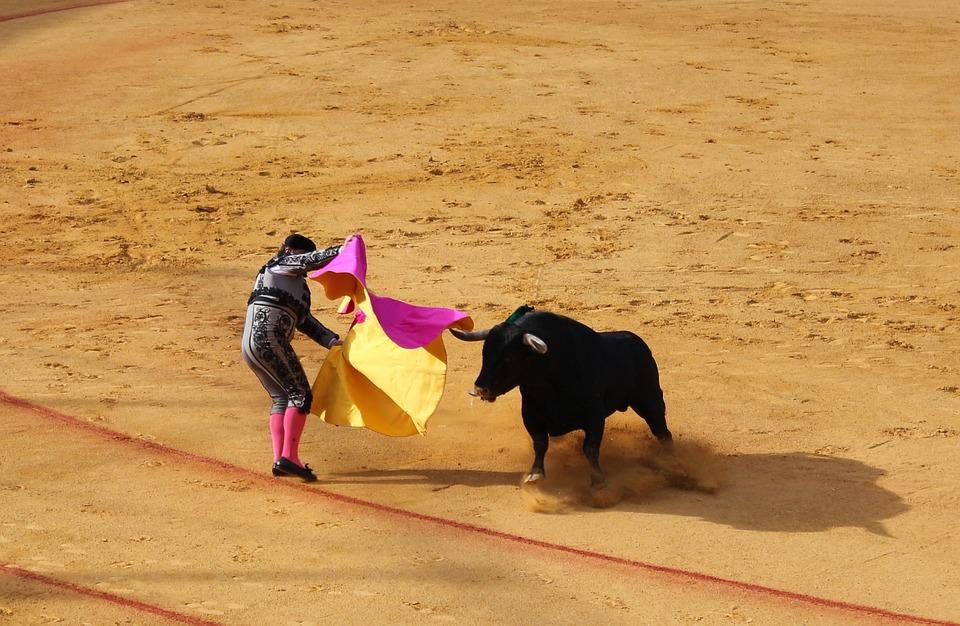 Bull fighting
