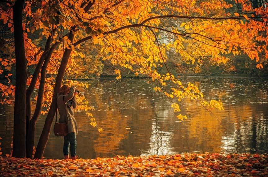 autumn-691263_960_720