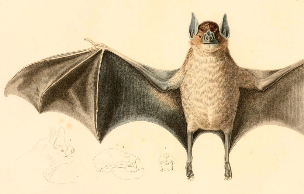 Bat Flying 2