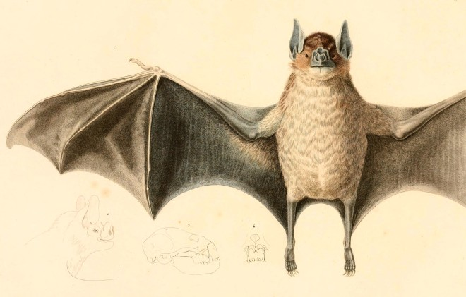 Bat Flying 2