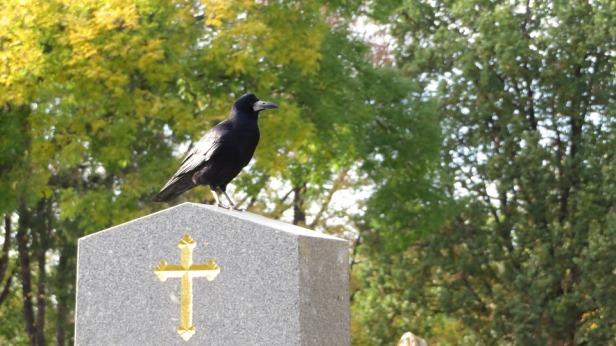 Cemetery Cross Crow Grave Black Stone