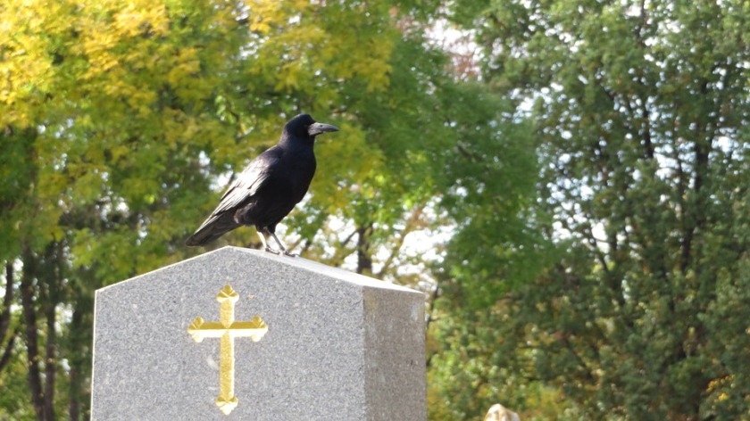 Cemetery Cross Crow Grave Black Stone