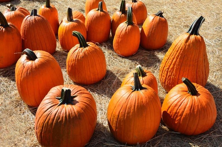 pumpkins-1592895_960_720