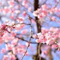 A Japanese Valentine's Day Poem (Erotica)